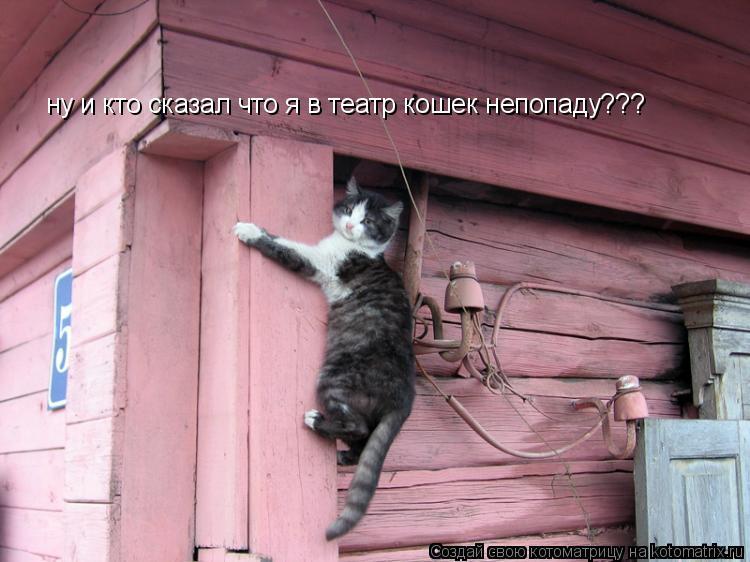 Котоматрица: ну и кто сказал что я в театр кошек непопаду???
