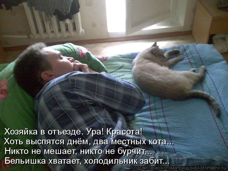 Котоматрица: Хозяйка в отъезде. Ура! Красота! Хоть выспятся днём, два местных кота... Никто не мешает, никто не бурчит... Бельишка хватает, холодильник заби