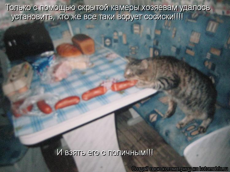 Котоматрица: Только с помощью скрытой камеры хозяевам удалось установить, кто же все таки ворует сосиски!!!! И взять его с поличным!!!