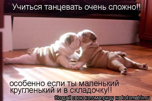 Котоматрица: Учиться танцевать очень сложно!! особенно если ты маленький кругленький и в складочку!!
