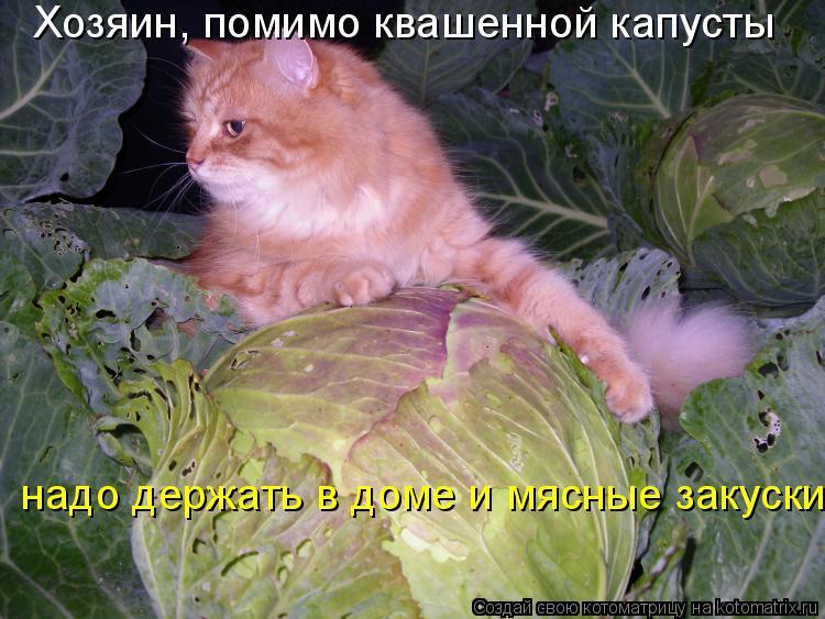 Котоматрица: Хозяин, помимо квашенной капусты  надо держать в доме и мясные закуски!