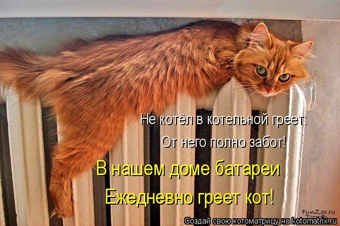 Котельный кот