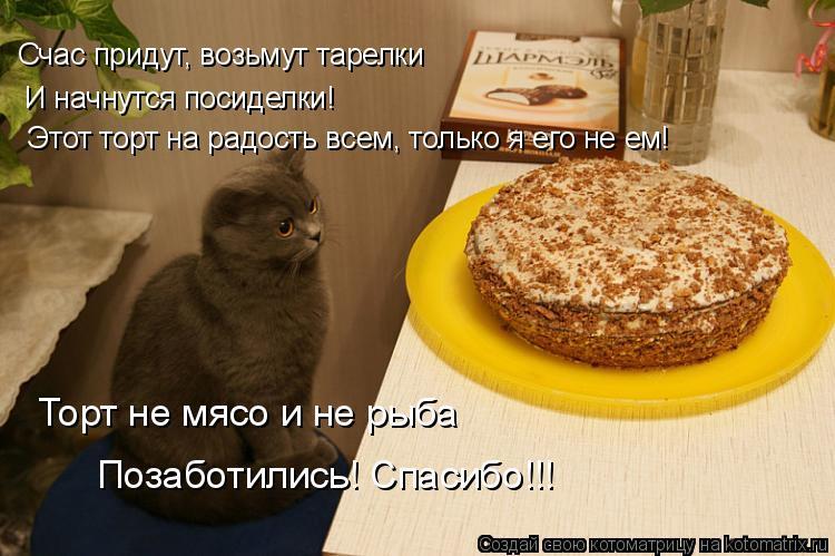 Котоматрица: Счас придут, возьмут тарелки И начнутся посиделки! Этот торт на радость всем, только я его не ем! Торт не мясо и не рыба Позаботились! Спасибо