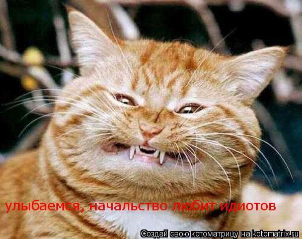 Котоматрица: Улыбайтесь начальство любит идиотов улыбаемся, начальство любит идиотов