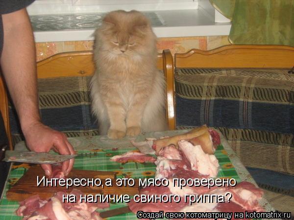 Котоматрица: Интересно,а это мясо проверено на наличие свиного гриппа?