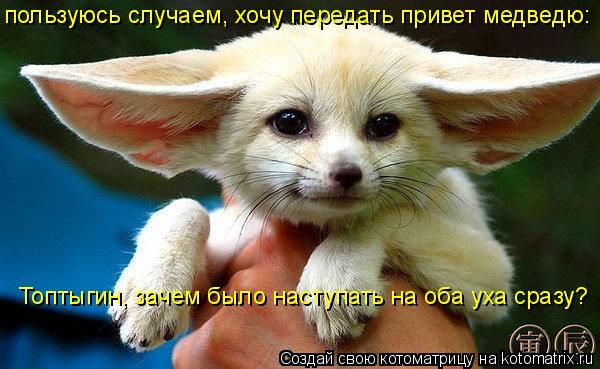 Котоматрица: пользуюсь случаем, хочу передать привет медведю: Топтыгин, зачем было наступать на оба уха сразу?