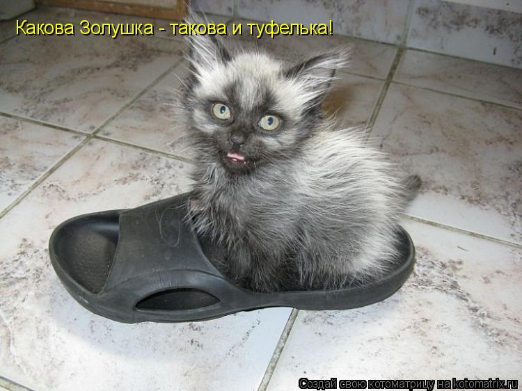Котоматрица: Какова Золушка - такова и туфелька!