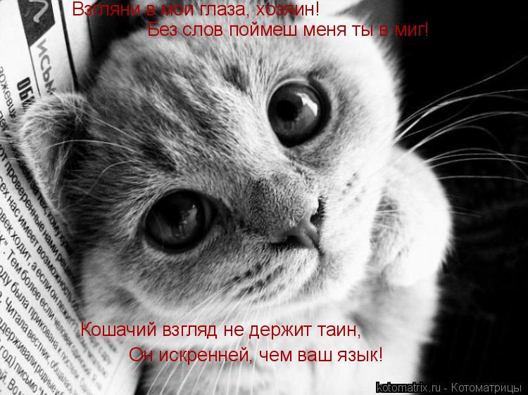 Котоматрица: Взгляни в мои глаза, хозяин! Без слов поймеш меня ты в миг! Кошачий взгляд не держит таин, Он искренней, чем ваш язык!