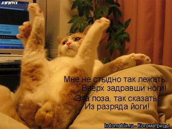 Котоматрица: Мне не стыдно так лежать, Вверх задравши ноги! Эта поза, так сказать, Из разряда йоги!