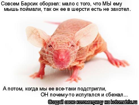 Котоматрица: Совсем Барсик оборзел: мало с того, что МЫ ему  мышь поймали, так он ее в шерсти есть не захотел.  А потом, когда мы ее все-таки подстригли,    ОН
