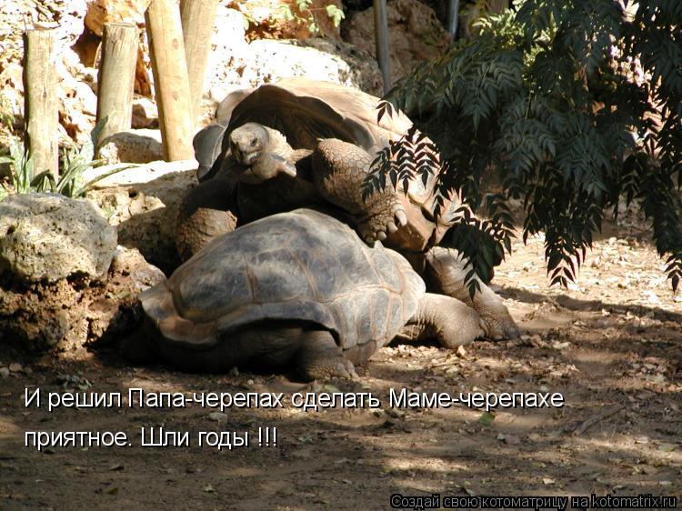 Котоматрица: И решил Папа-черепах сделать Маме-черепахе приятное. Шли годы!!! И решил Папа-черепах сделать Маме-черепахе приятное. Шли годы !!!