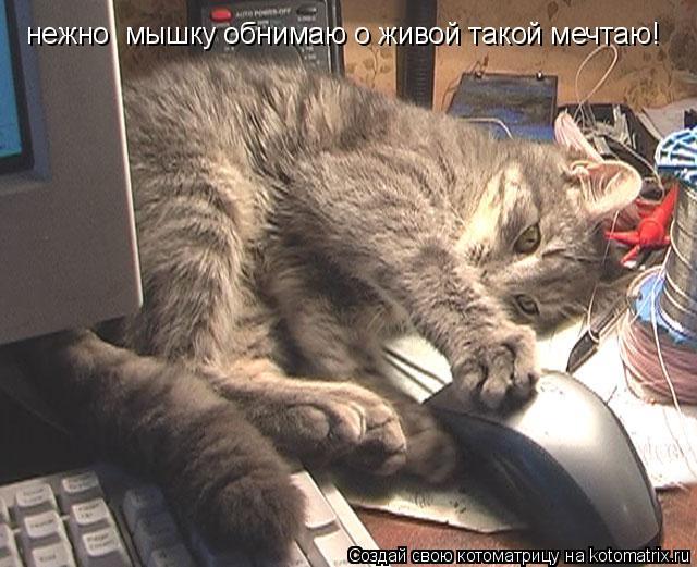 Котоматрица: нежно  мышку обнимаю о живой такой мечтаю!