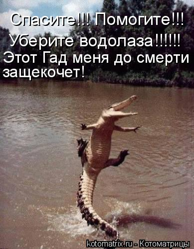 Котоматрица: Спасите!!! Помогите!!! Уберите водолаза!!!!!! Этот Гад меня до смерти  защекочет!