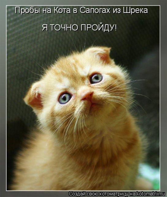 Котоматрица: Пробы на Кота в Сапогах из Шрека Я ТОЧНО ПРОЙДУ!
