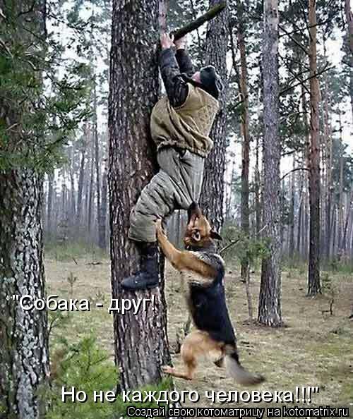 """Котоматрица: """"Собака - друг! Но не каждого человека!!!"""""""