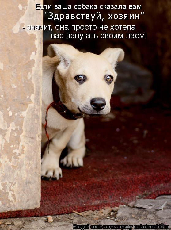 """Котоматрица: Если ваша собака сказала вам  - значит, она просто не хотела вас напугать своим лаем! """"Здравствуй, хозяин"""""""