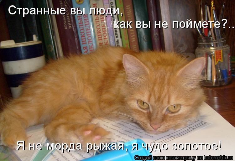 Котоматрица: Странные вы люди,  как вы не поймете?.. Я не морда рыжая, я чудо золотое!