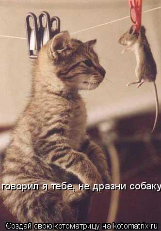 Котоматрица: говорил я тебе, не дразни собаку