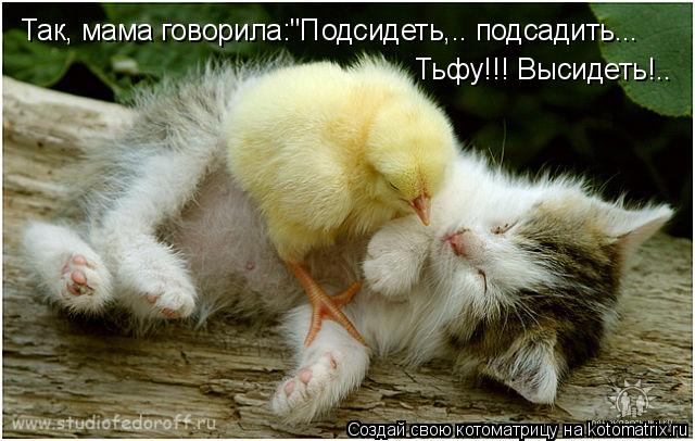 """Котоматрица: Так, мама говорила:""""Подсидеть,.. подсадить... Тьфу!!! Высидеть!.."""