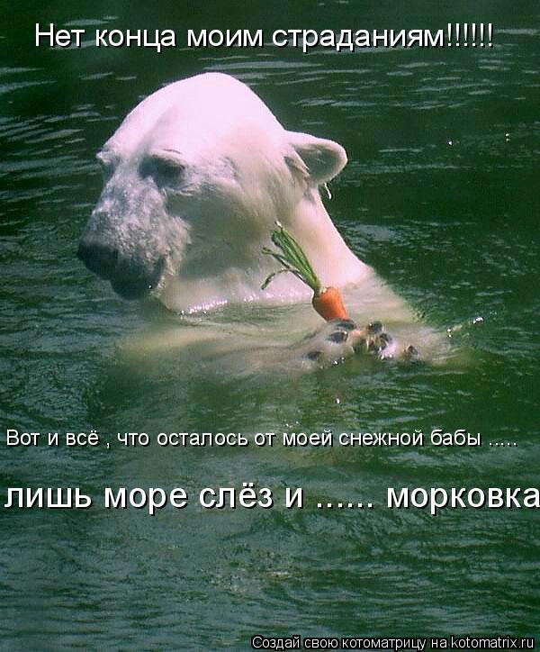 Котоматрица: Нет конца моим страданиям!!!!!! Вот и всё , что осталось от моей снежной бабы ..... лишь море слёз и ...... морковка .....