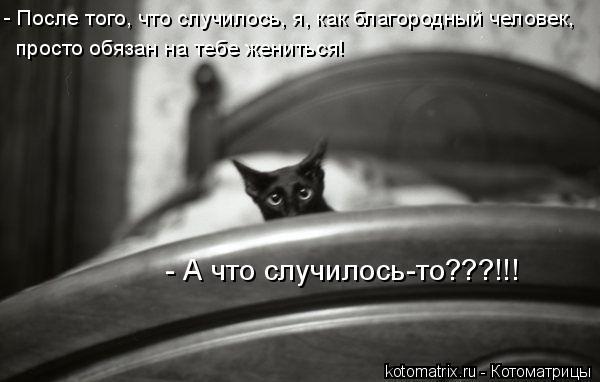 Котоматрица: - После того, что случилось, я, как благородный человек,  просто обязан на тебе жениться! - А что случилось-то???!!!