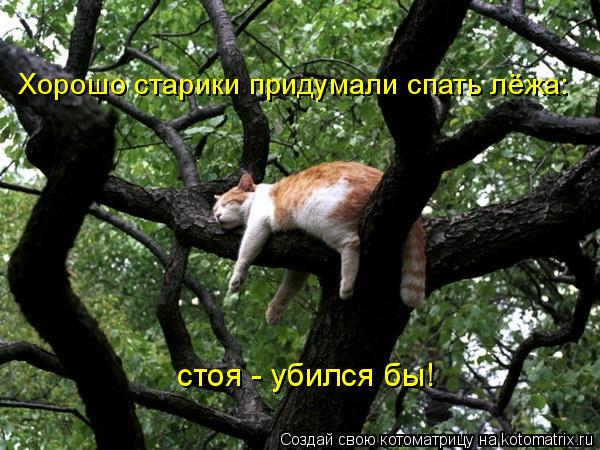 Котоматрица: Хорошо старики придумали спать лёжа:   стоя - убился бы!