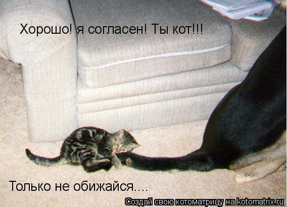 Котоматрица: Хорошо! я согласен! Ты кот!!! Только не обижайся....