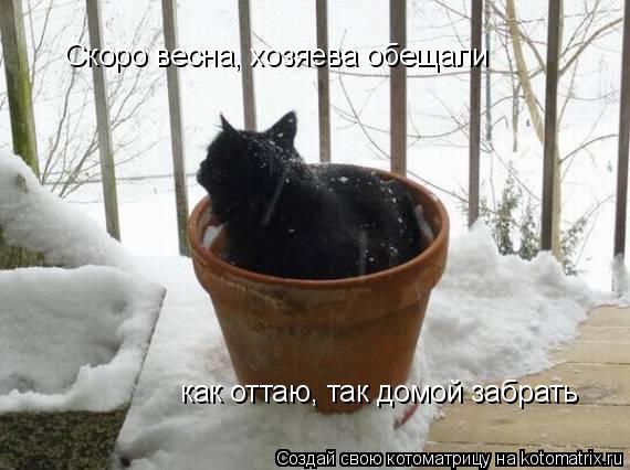 Котоматрица: Скоро весна, хозяева обещали как оттаю, так домой забрать