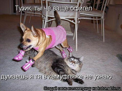 Котоматрица: Тузик, ты чё ваще офигел думаешь я тя в камуфляже не узнаю..