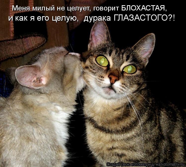 Котоматрица: Меня милый не целует, говорит БЛОХАСТАЯ,  и как я его целую,  дурака ГЛАЗАСТОГО?!