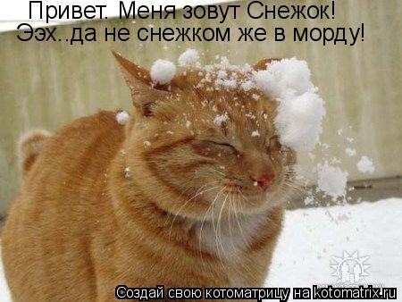 Котоматрица: Привет. Меня зовут Снежок! Ээх..да не снежком же в морду!