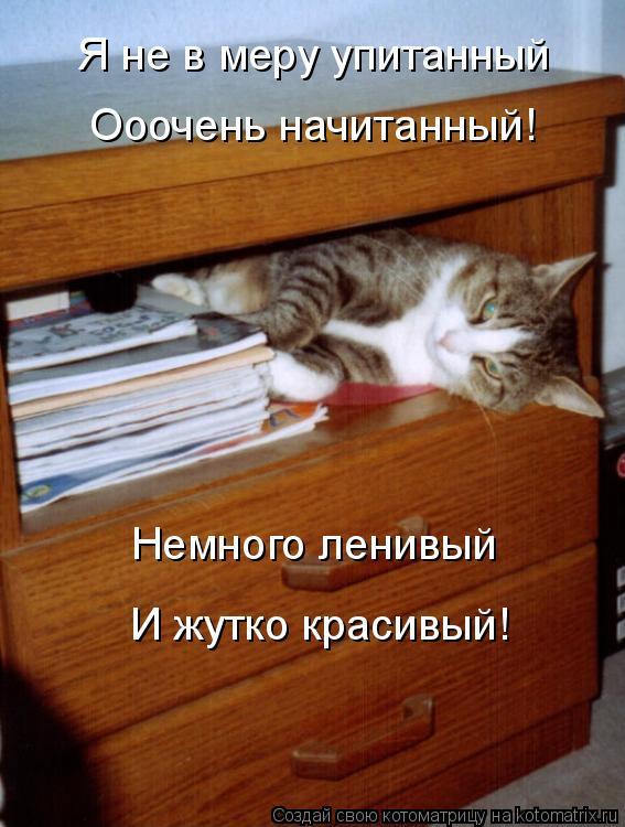 Котоматрица: Я не в меру упитанный Ооочень начитанный! Немного ленивый И жутко красивый!