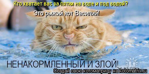 Котоматрица: Кто хватает вас за пятки на воде и под водой? Это рыжий кот Василий! НЕНАКОРМЛЕННЫЙ И ЗЛОЙ!