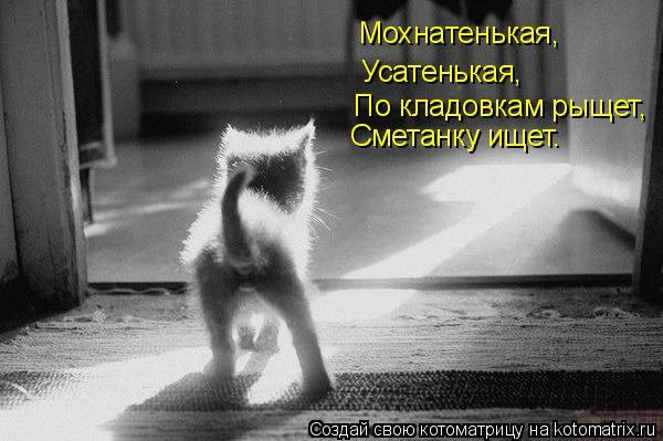 Котоматрица: Мохнатенькая, Усатенькая, По кладовкам рыщет, Сметанку ищет.