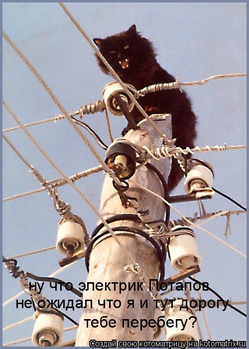 Котоматрица: ну что электрик Потапов не ожидал что я и тут дорогу тебе перебегу?