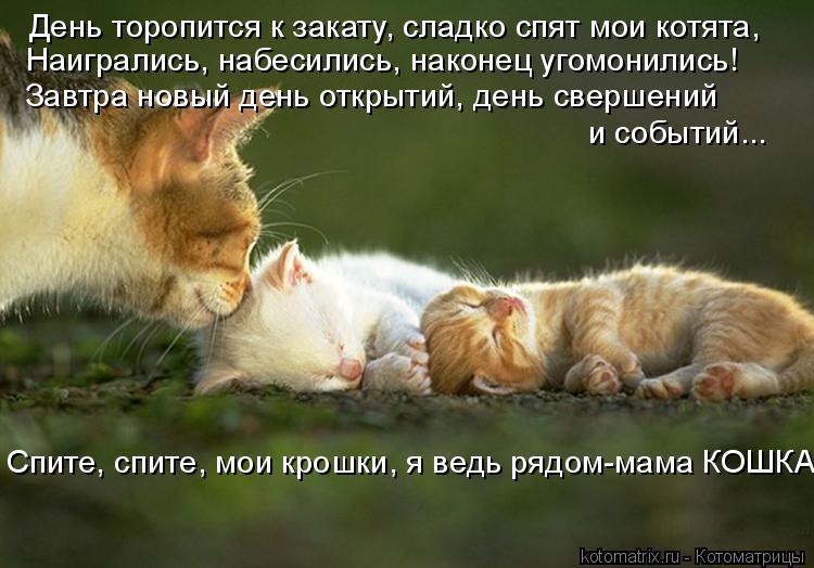 Котоматрица: День торопится к закату, сладко спят мои котята, Наигрались, набесились, наконец угомонились! Завтра новый день открытий, день свершений  и
