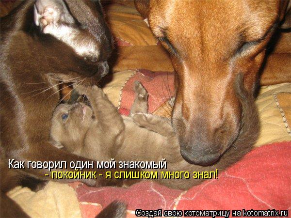 http://kotomatrix.ru/images/lolz/2009/04/30/71.jpg