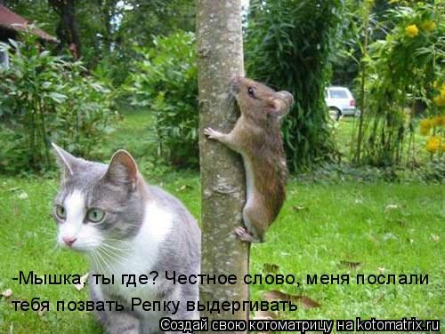 Котоматрица: -Мышка, ты где? Честное слово, меня послали  тебя позвать Репку выдергивать