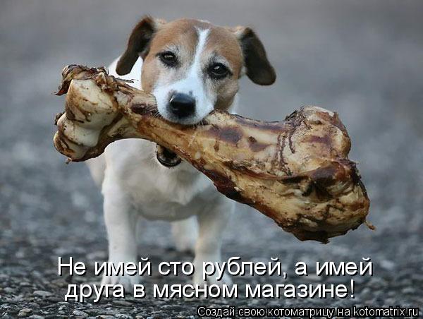 Котоматрица: Не имей сто рублей, а имей друга в мясном магазине!