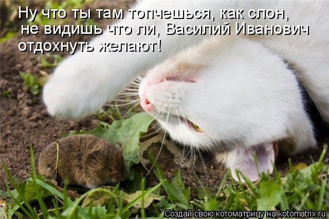 Котоматрица: Ну что ты там топчешься, как слон,   не видишь что ли, Василий Иванович  отдохнуть желают!