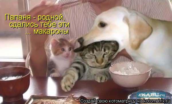 http://kotomatrix.ru/images/lolz/2009/04/30/Th.jpg