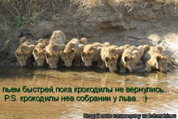 Котоматрица: пьем быстрей,пока крокодилы не вернулись... P.S. крокодилы неа собрании у льва.. :)