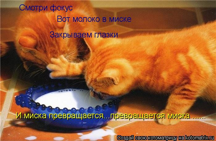 Котоматрица: Смотри фокус Вот молоко в миске Закрываем глазки И миска превращается...превращается миска ......