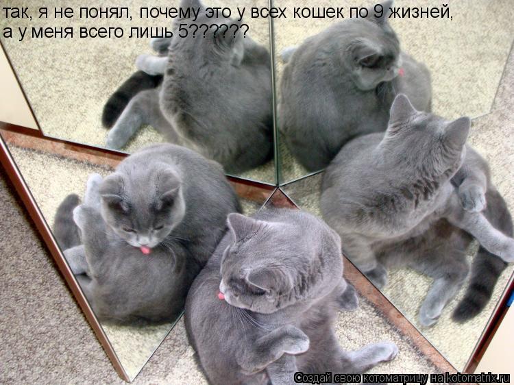 Котоматрица: а у меня всего лишь 5?????? так, я не понял, почему это у всех кошек по 9 жизней,