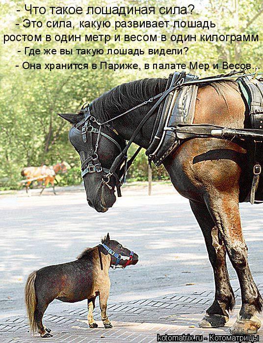 Котоматрица: - Что такое лошадиная сила? - Это сила, какую развивает лошадь  ростом в один метр и весом в один килограмм  - Она хранится в Париже, в палате Ме