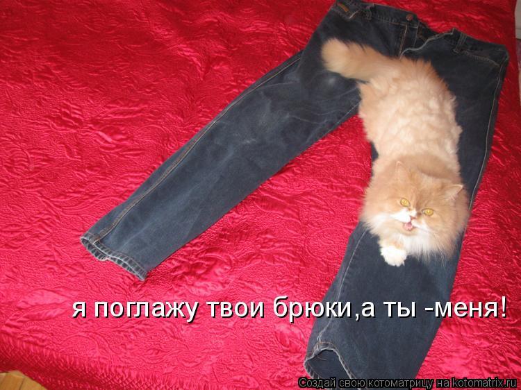Котоматрица: я поглажу твои брюки,а ты -меня!