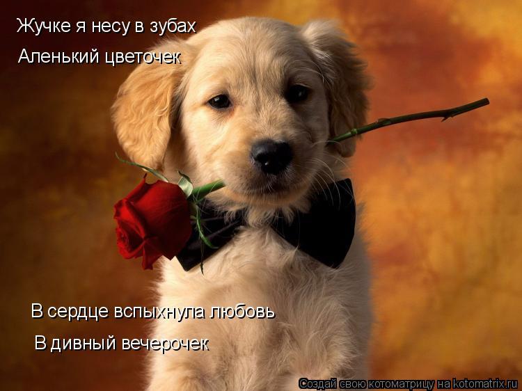 Котоматрица: Жучке я несу в зубах Аленький цветочек В сердце вспыхнула любовь В дивный вечерочек