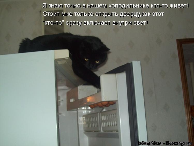 """Котоматрица: Я знаю точно,в нашем холодильнике кто-то живет! """"кто-то"""" сразу включает внутри свет! Стоит мне только открыть дверцу,как этот"""