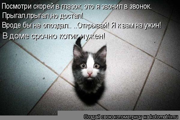 http://kotomatrix.ru/images/lolz/2009/05/02/cg.jpg