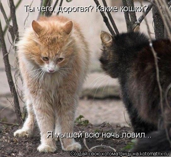Котоматрица: Ты чего, дорогая? Какие кошки? Я мышей всю ночь ловил...